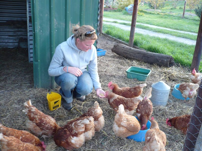 2009 September Janine (German) feeding the chooks