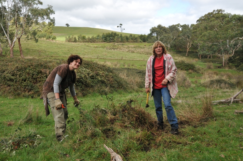 2011 May  Rebecca (Aussie) and Ruth clearing blackberry shrubs