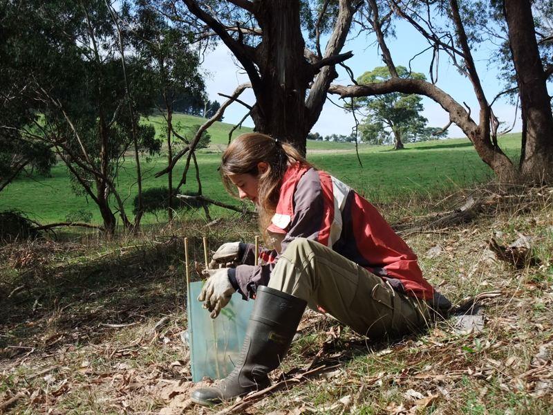 2011 May Sandrine (Bel) planting trees