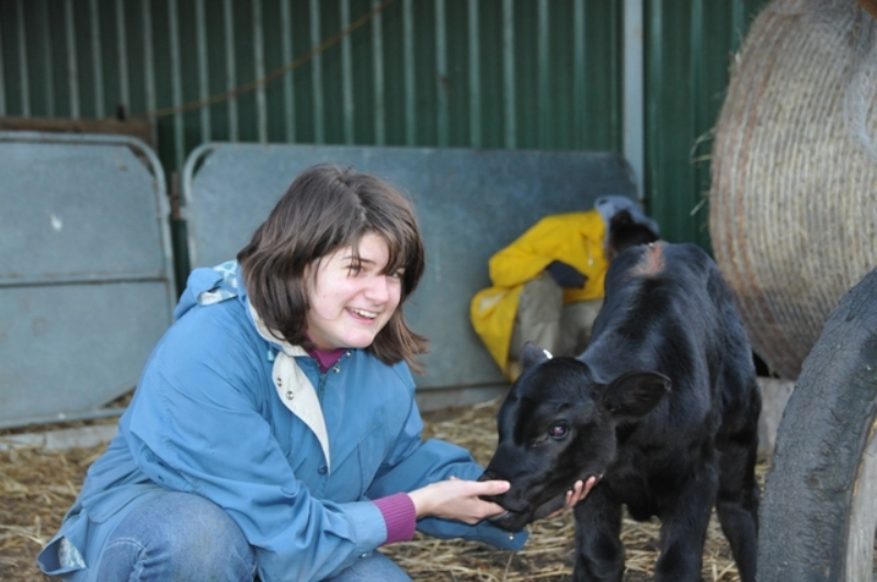 """2011 August Claire (English) and new calf """"Claire"""""""