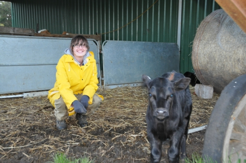 """2011 August Laura (English) and new calf """"Laura"""""""