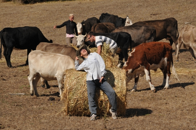 2012 January Maelin (Fra) helping Sandra (Swe) and Chris (Swe) feed cattle