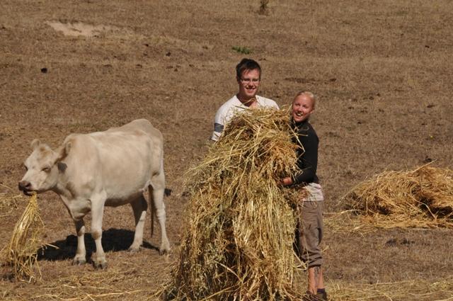 2012 January Chris (Swe) and Sandra (Swe) feeding cattle