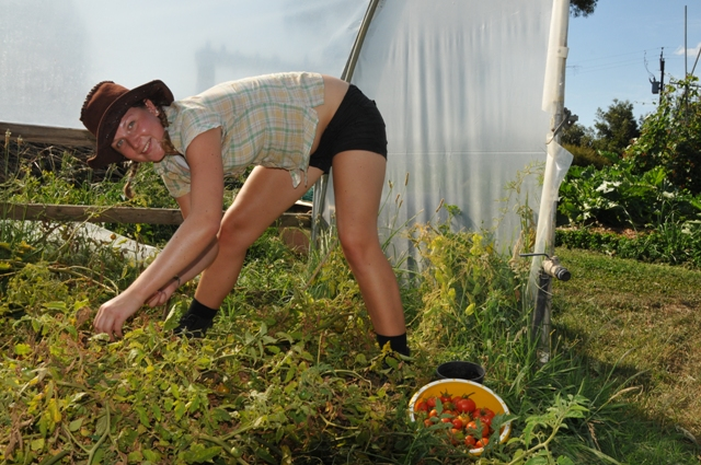 2012 January Yana picking veggies in the green-house
