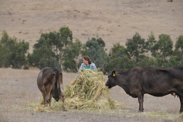2013 March Gabby(Neth) feeding the cows