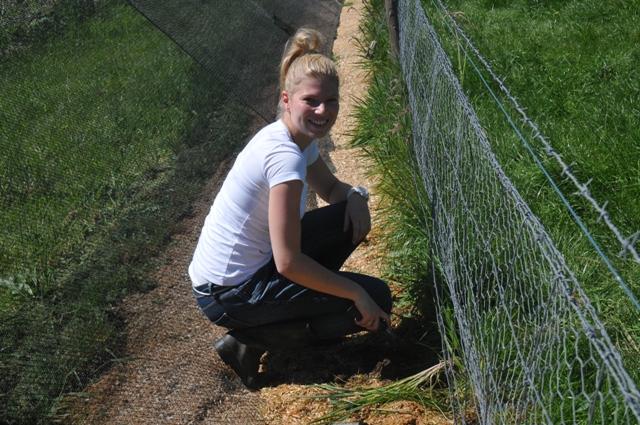 2013 September Anne(Ger) weeding the orchard