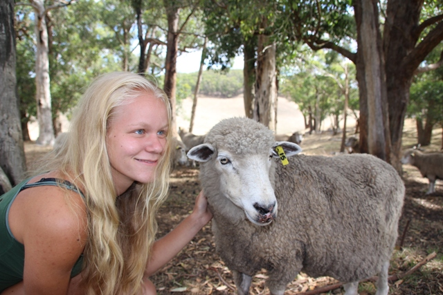 2014 February Jessica(Ger) and our sheep